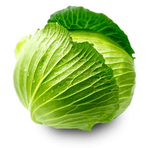 Cabbage/Patta Gobhi/पत्ता गोभी